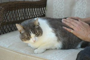 animal reiki treatment for cat