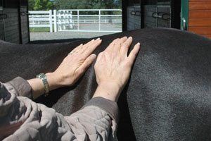 history of animal reiki